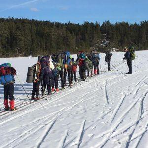 Bøler på skitur i rekke
