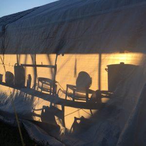 Grünnerløkka MS mat telt i solnedgang